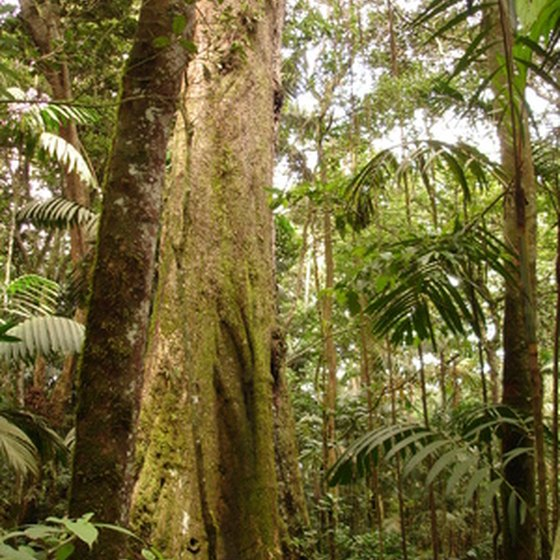 The beauty of Hawaiian rainforests can hide potential skin rashes