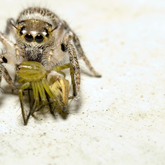 Some spiders in the Netherlands can be dangerous.
