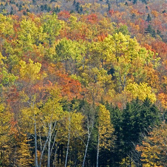 The fall foliage season peaks in October