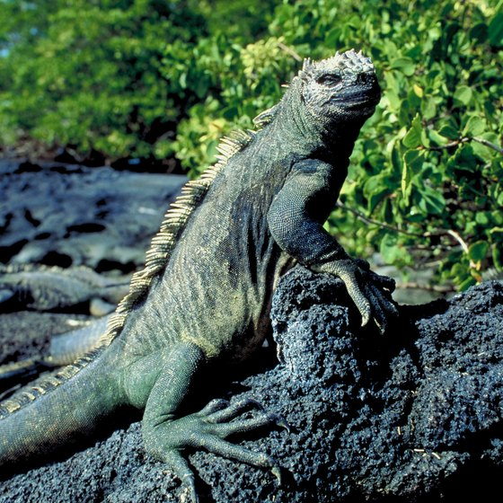 Downtown Guayaquil has historic neighborhoods and a park full of iguanas.