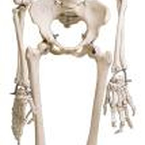 skeletal system articles