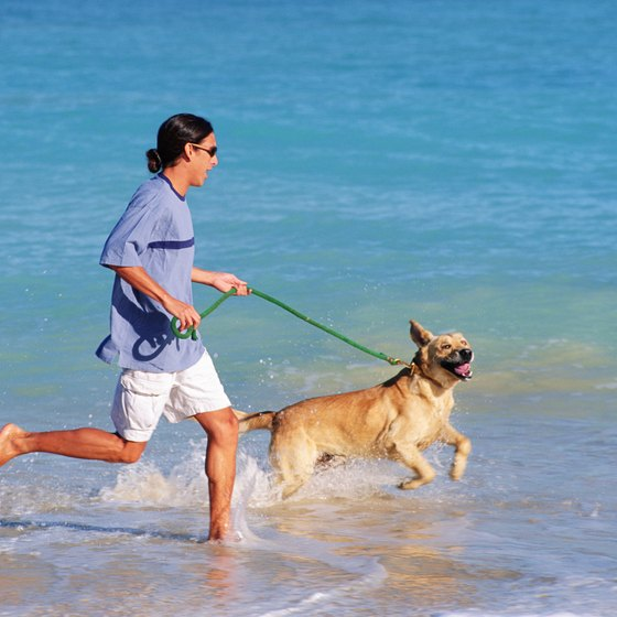 Bring man's best friend along for a day of play along the Gulf Coast.