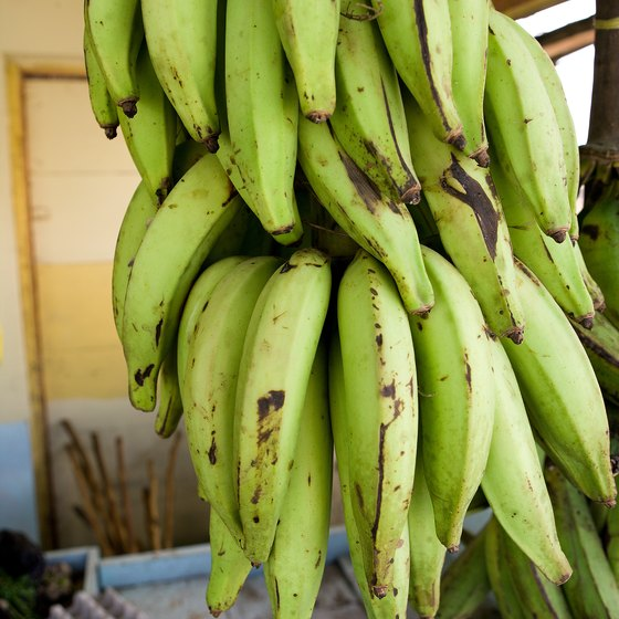 Plantains are not as sweet as bananas.