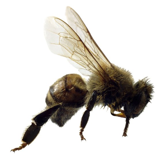Most insect bites and stings are not life-threatening.
