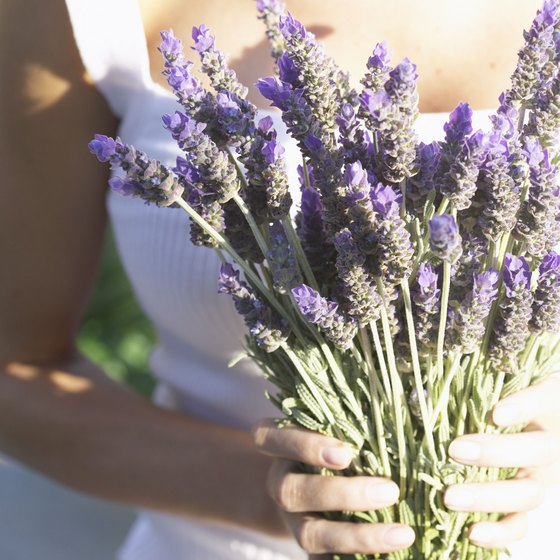 Lavender tea may relieve the symptoms of anxiety and depression.