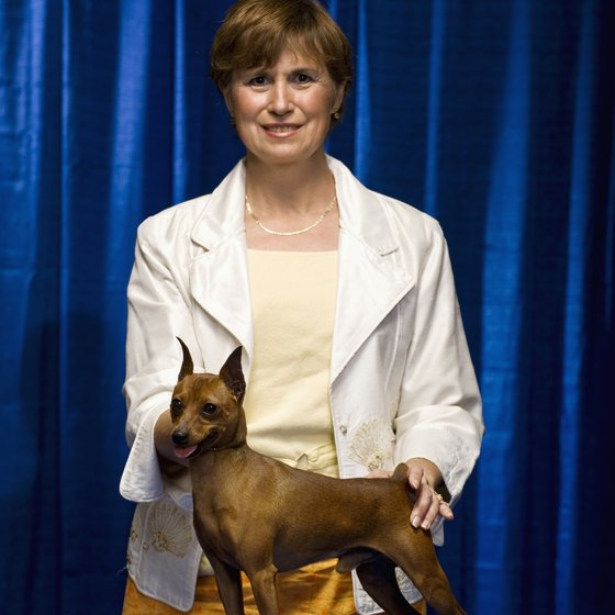 Show dogs can earn thousands of dollars in prizes.