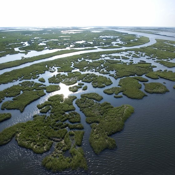 Some of Louisiana's great natural landmarks are wetlands.