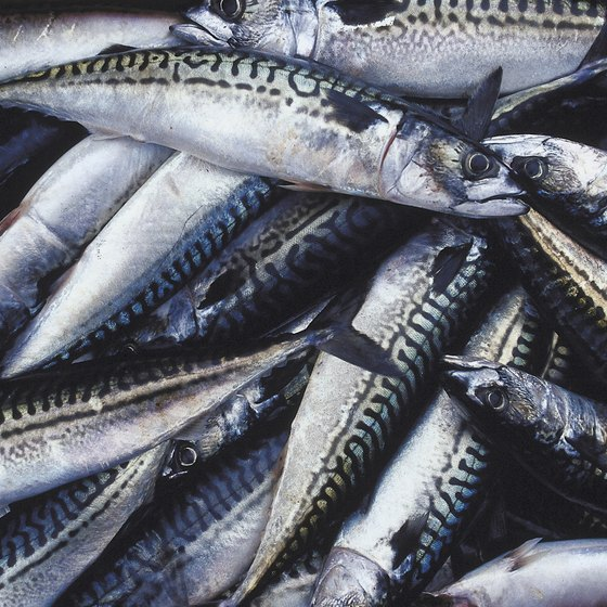 Mackerel is an excellent source of several nutrients.