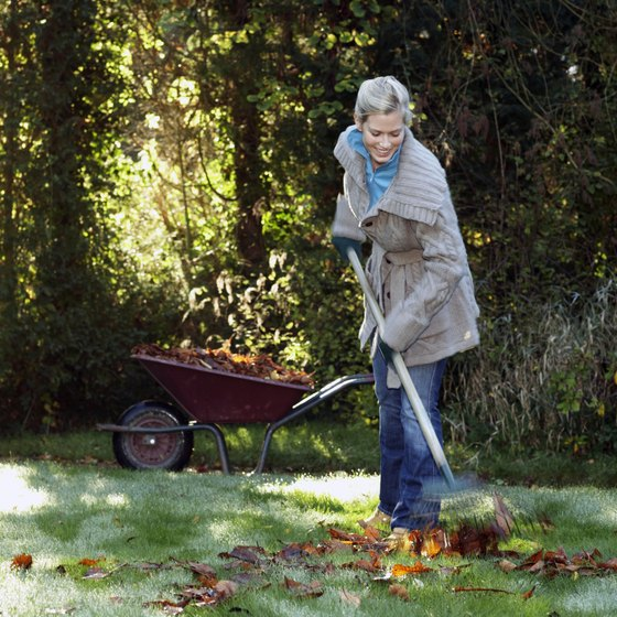 Raking leaves can burn calories and give you a good workout.