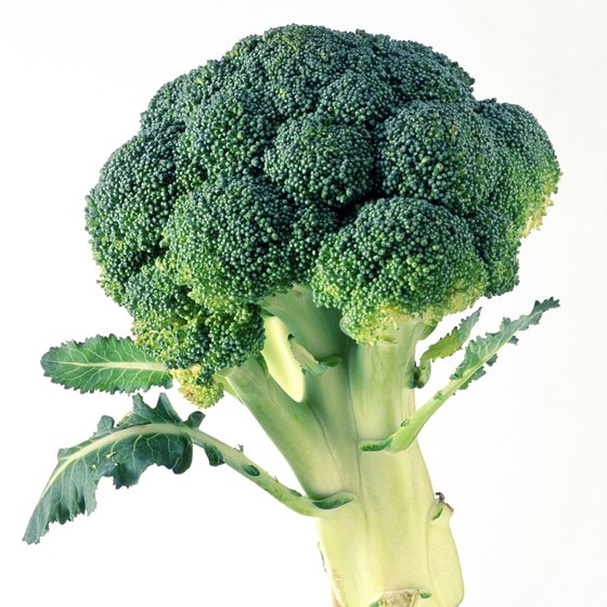 Firm, dark green broccoli with no yellowing offers the highest nutritional value.