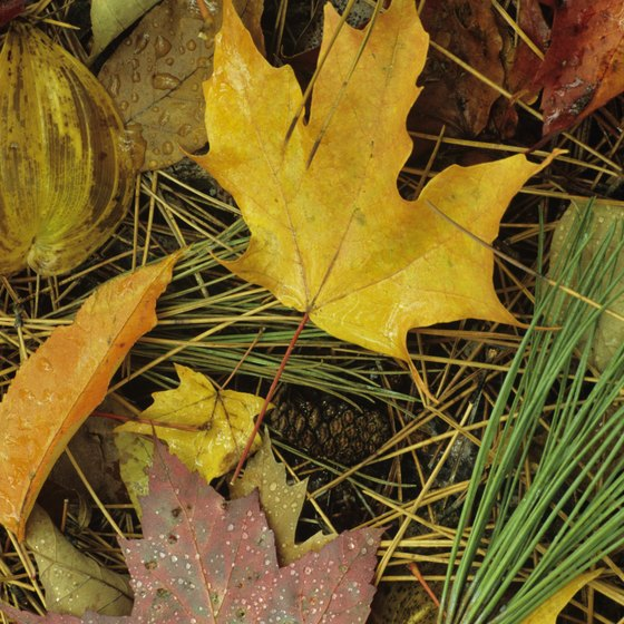 The Autumn Leaf Festival was named in honor of the fall foliage in Clarion.
