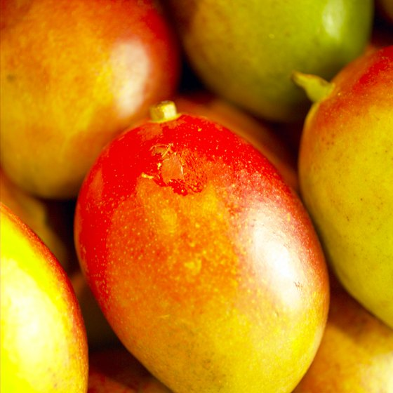 The Fairchild variety of mango is among the more popular South Florida varieties.