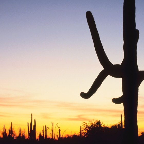 Enjoy desert scenery right outside your tent or RV when camping in Avondale.