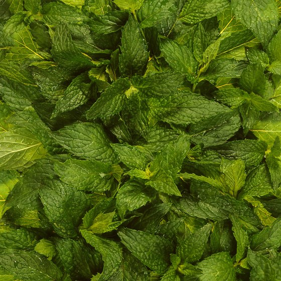 Peppermint oil contains menthol.