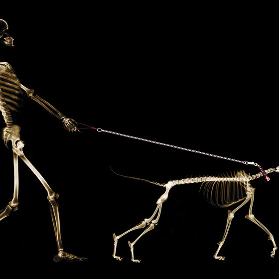 Even walking the dog can exercise your bones.