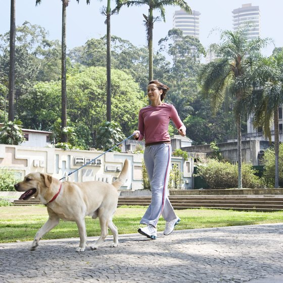 Walk your dog twice a day to lose weight.