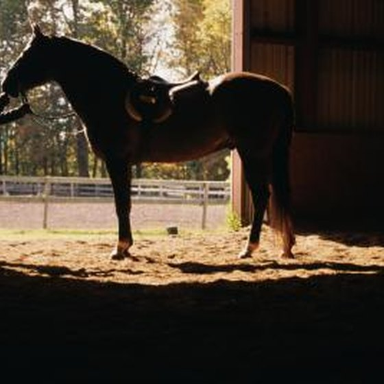 How to Start a Horse Farm Business