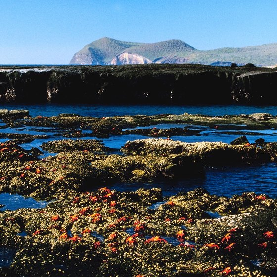 The Galapagos Islands lie more than 620 miles from Ecuador's coast.