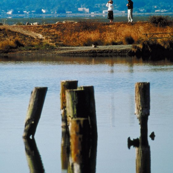The sole beach in Arcata's city limits is a marsh.