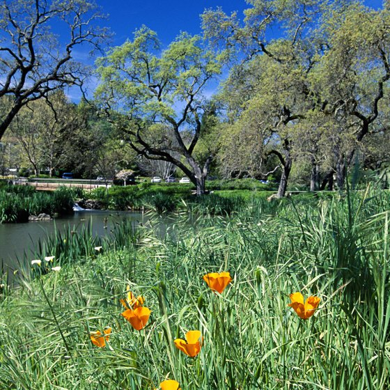 Lake Berryessa summers are punctuated with wildflowers.