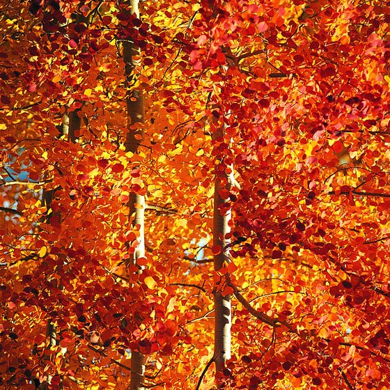 Steamboat Springs provides colorful autumn camping.