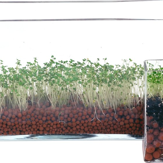 Alfalfa sprouts provide vitamin K and folate.