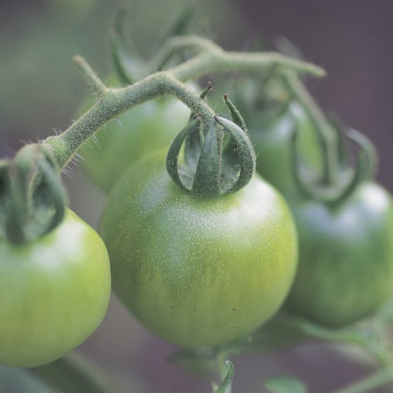 Green tomatoes are unripe red tomatoes, so you can pick and eat them sooner.