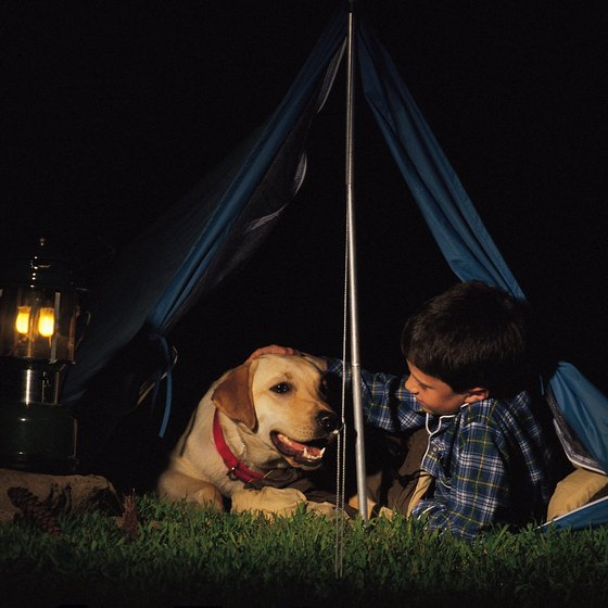 Bring your canine companion to one of Florida's campgrounds that welcome dogs.