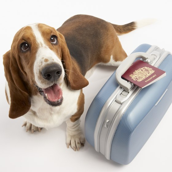 Prepare your pets for airline travel.
