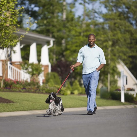 Walking your dog at a brisk pace counts toward your cardio.