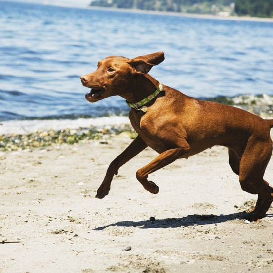 Take your pooch to one of Illinois' dog-friendly beaches.