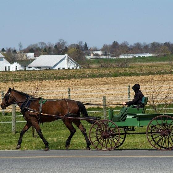 Amish Horse & Cart