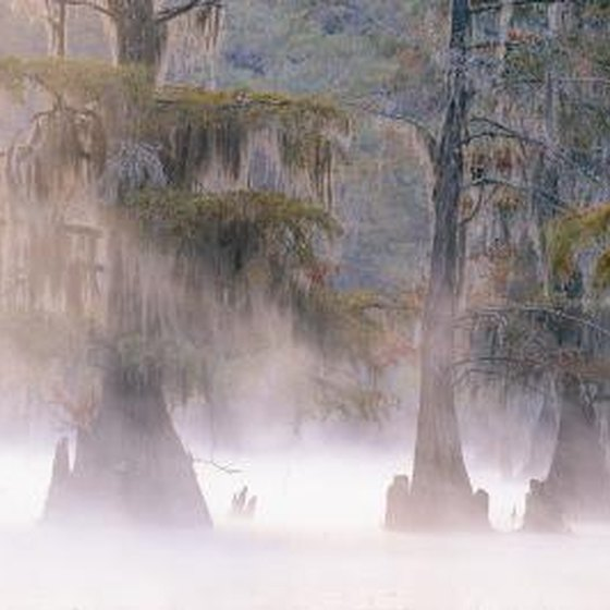 Apartments In Carrollton Kentucky: Places To Stay On Caddo Lake