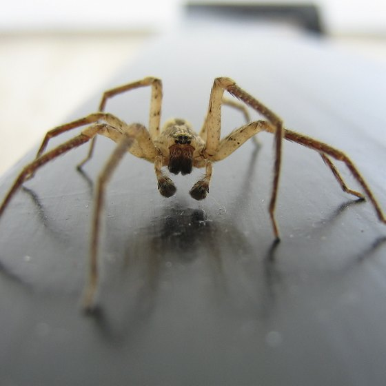Most spiders are harmless, but may deliver an itchy bite.