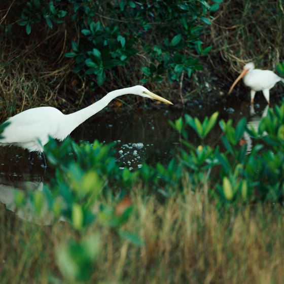 Estuaries are essential habitat for resident and migratory wildlife.