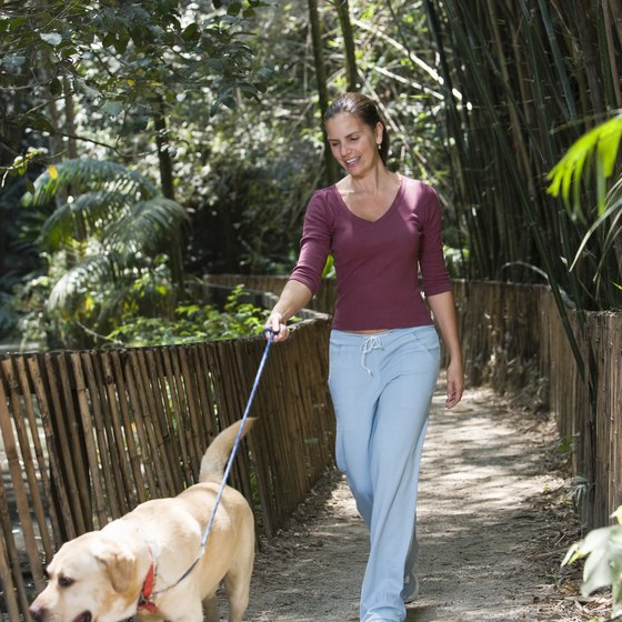 Taking your dog for a walk can serve as a motivational physcial exercise.