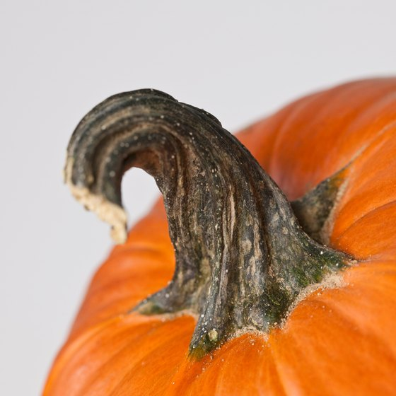 Pumpkins belong to the same winter squash family as acorn and butternut squash.