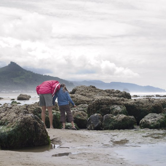 Dress warmly to explore the tide pools along the Oregon Coast.