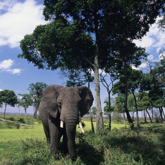 Several award-winning wildlife documentaries have been filmed at Mombo Camp in Botswana.