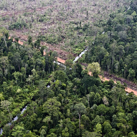 An aerial view of a deforested area in the rainforest.