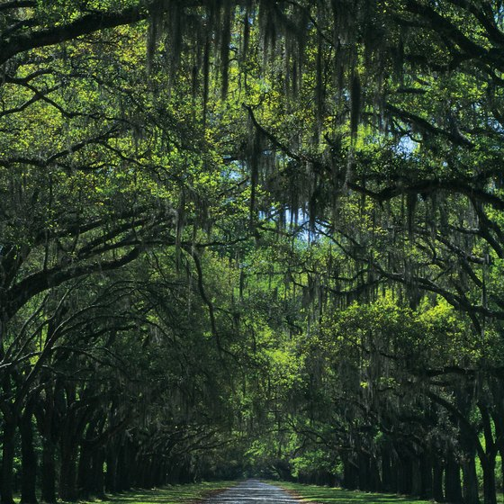 Alabama offers a wide range of campgrounds from forests to near the gulf coast.