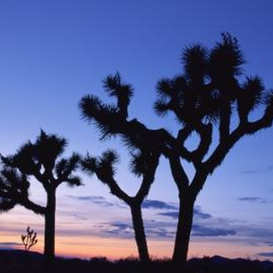 Campgrounds Near Victorville, California