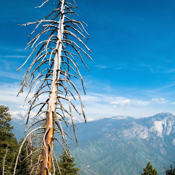 Enjoy remote Alpine views as you hike through conifer forests in Sequoia National Park en route to Eagle Lake.