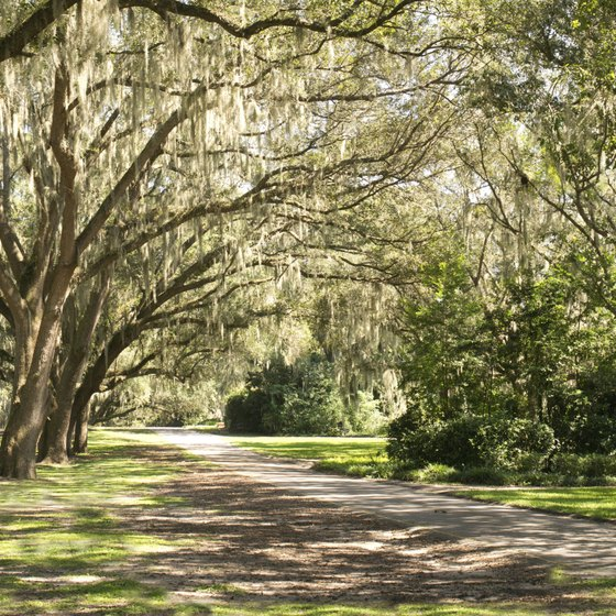Ocala's southern landscapes provide boomers a feast for the eyes.