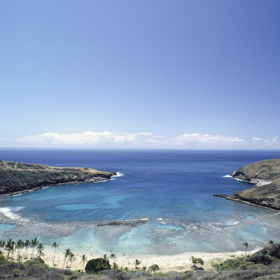 Hanauma Bay on Oahu has more than 200 species of fish.