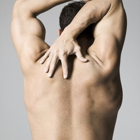 The serratus anterior attaches the middle edge of the shoulder blade to several ribs.