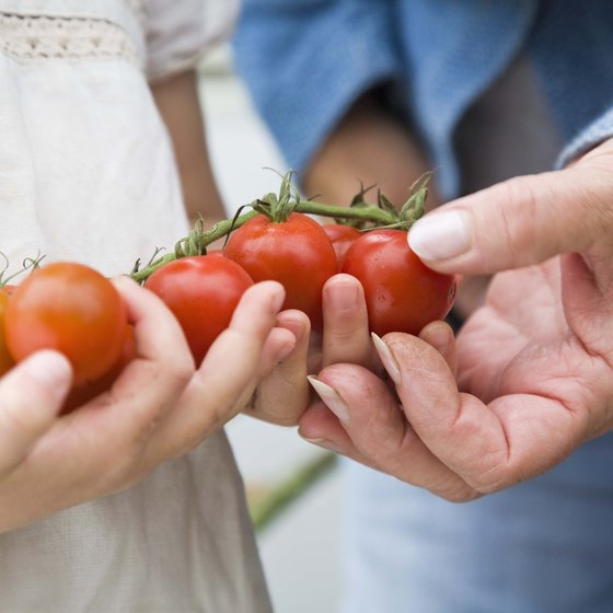 Tomatoes contain a variety of organic acids.
