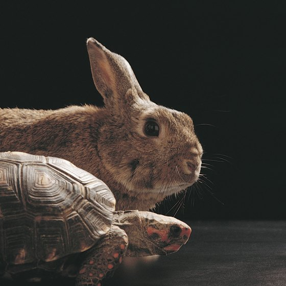 Should you take a tortoise or hare approach to your training?