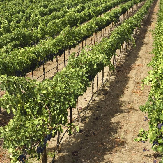 The wine industry in Southern Illinois is expanding rapidly.