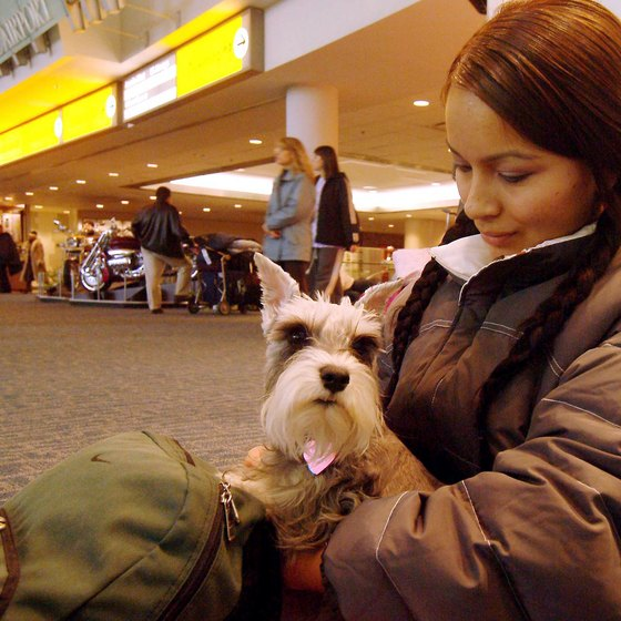 Your pet can roam on a leash outside the airport, but on the flight, he needs to stay in his carrier.